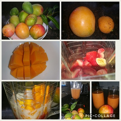 Improving Our Health and Wellbeing Through Gardening: Fruit Trees – Sour  Orange and Mango - Lake Health and Wellbeing